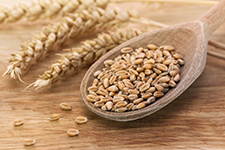 crops_factsheet_wheat