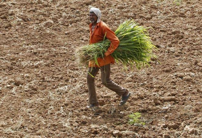 The Need for an Agricultural Policy to Combat Zinc Deficiency in India – Business Today